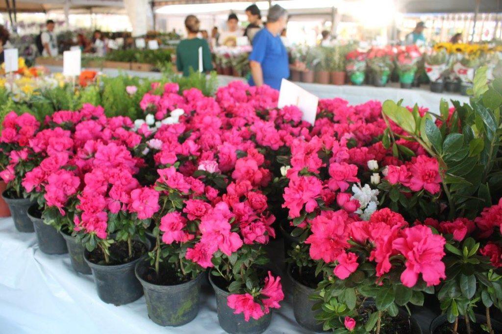 Resultado de imagem para festival flores de holambra sao luis 2019