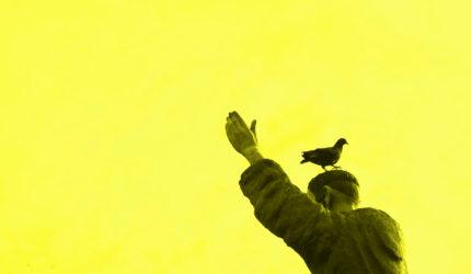 Cuidado com o pombo