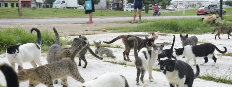 Situação de animais abandonados coloca em risco saúde pública