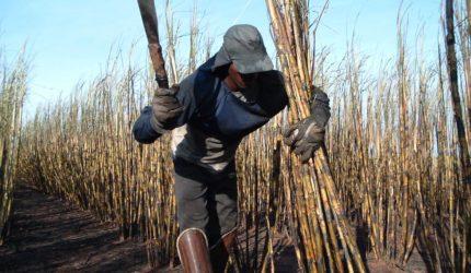 Trabalho escravo no Maranhão: 60% dos casos são degradantes