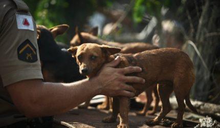 Passo a passo para denunciar maus-tratos a animais