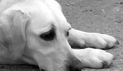 Maltratar animais é crime. Informe-se, denuncie.
