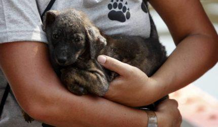 Animais abandonados precisam de resgate seguro