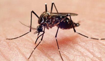 Casos de dengue diminuem em todo o estado do Maranhão