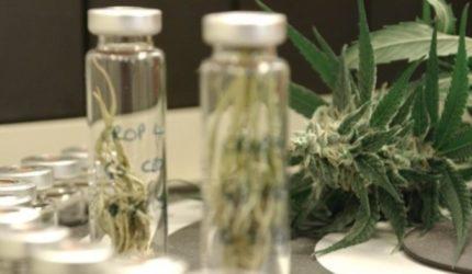 Cannabis é usada em tratamentos de crianças com microcefalia no Maranhão