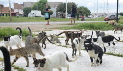 Feira em prol de gatos abandonados acontece na próxima semana