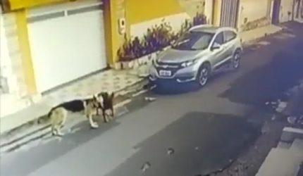 Vídeo de enfermeira atropelando cães repercute nas redes sociais