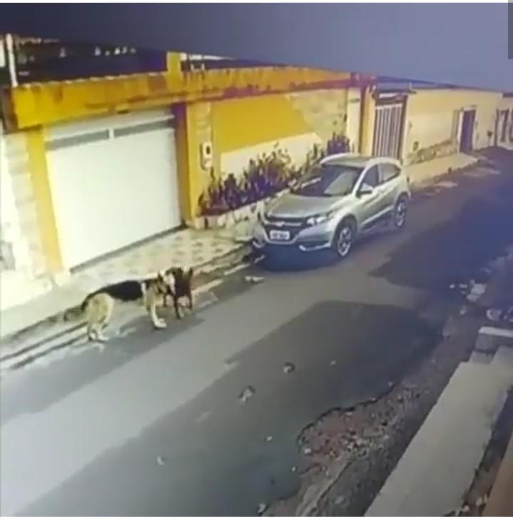 Resultado de imagem para cães atropelados em São Luis