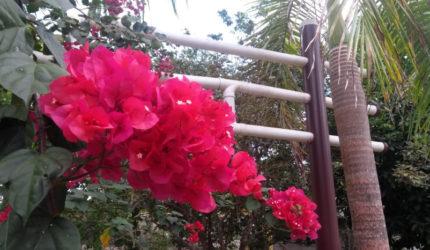 Começa hoje a Primavera no Hemisfério Sul