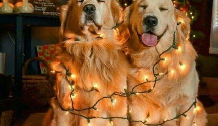 Natal dos Pets: dicas para a segurança dos bichinhos na festa