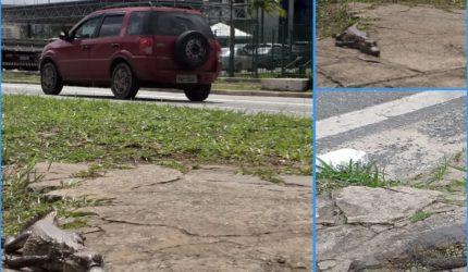 Filhote de jacaré é encontrado na Avenida Jerônimo de Albuquerque, em São Luís