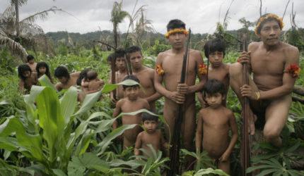 MP pede reforço policial para proteger território indígena Awá-Guajá, no Maranhão
