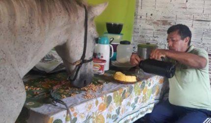 Conheça a história da família que divide o teto com um cavalo em São Luis