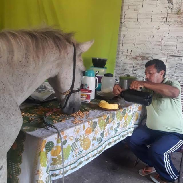 A história da família que divide o teto com um cavalo em São Luis