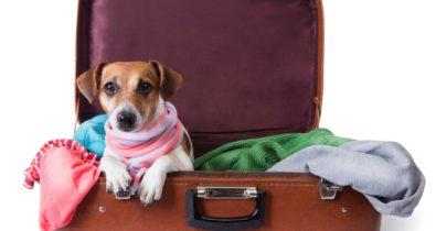 Vai viajar? Confira como escolher um hotel para deixar seu cãozinho