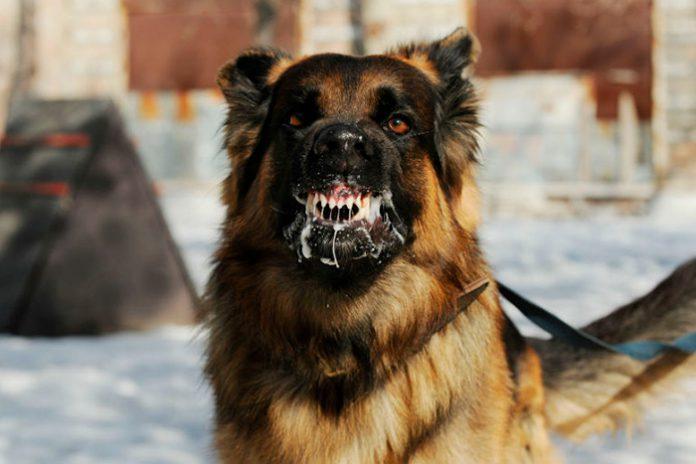 Mês Do Cachorro Louco Veterinário Responde Questões Sobre A