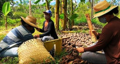 Ações do Governo para as quebradeiras de coco babaçu