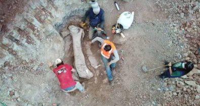 Dinossauro gigante achado no Maranhão