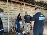Polícia Civil incinera cerca de 15 kg de drogas em Coroatá