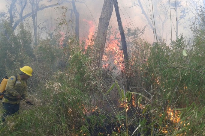 Reserva Arariboia é atingida por incêndio e prejudica povos indígenas