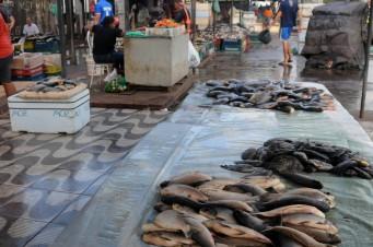 Sem higienização, pescado é vendido na Praia Grande ao lado do Mercado do Peixe