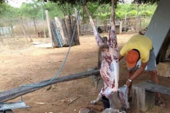 Homem abatia jumentos em casa e vendia a carne em Caxias