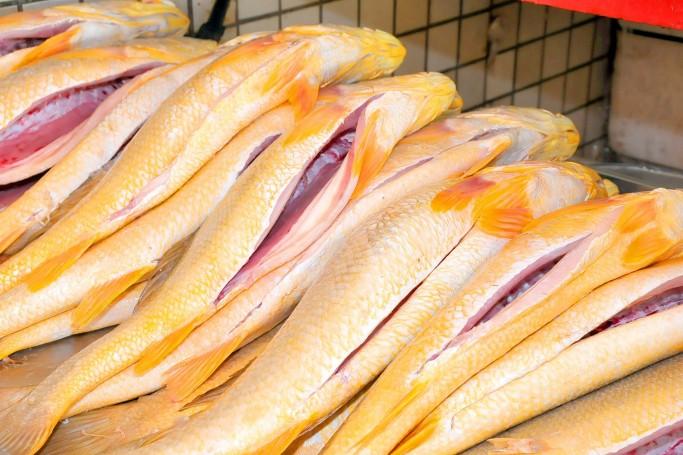 10/03/2011. Crédito: A.Baêta/OIMP/D.A Press. Brasil. São Luís - MA. Peixes para a Semana Santa no Mercado do Peixe, Bairro do Portinho.